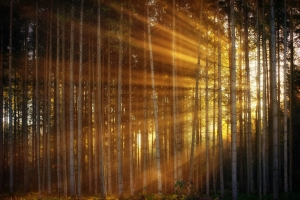 sunlight shining through trees in the forest