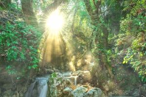forest_stream